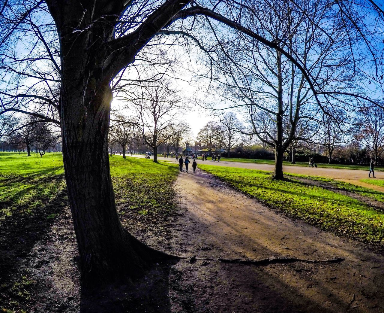 Kensington Park Tree Bare Tree Nature Grass Outdoors Day Photography Photooftheday Photographer GoPrography Goprooftheday
