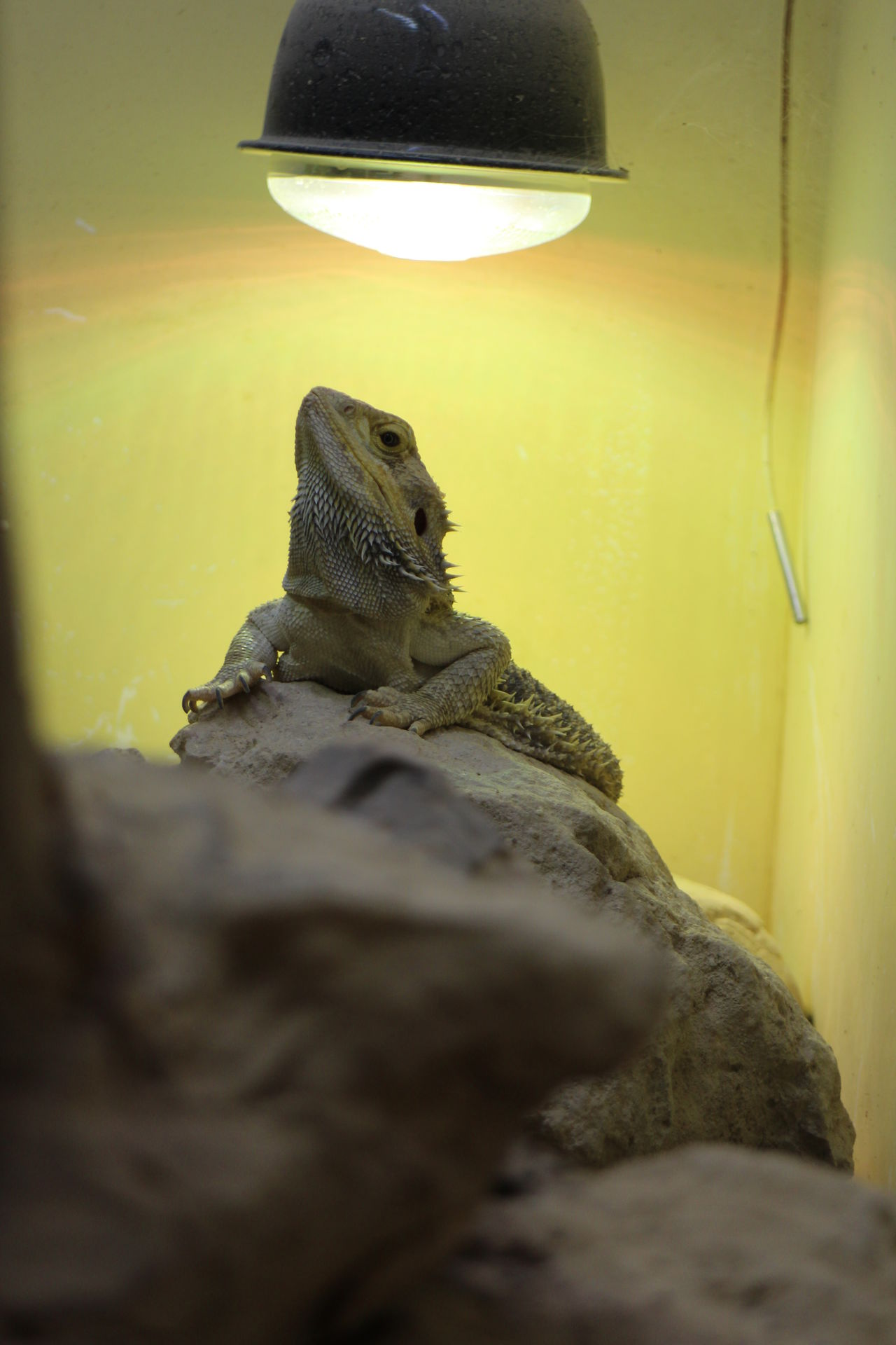 Reptile World Reptile Reptiles Facts Animals Planets Zoo Animals Photography Nature_collection Animals In Captivity Nature Photography Animal Wildlife Animal Photography Animals In The Wild Animal Animal Themes Wildlife & Nature Wildlife Park Reptilecollection Reptile Photography