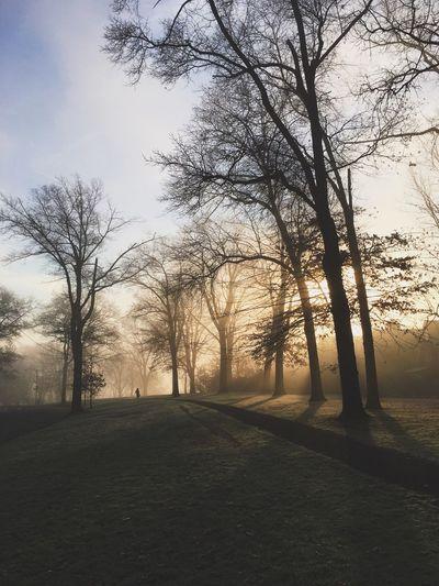 Sunrise EyeEm Best Shots - Nature Trees Park The Great Outdoors - 2016 EyeEm Awards