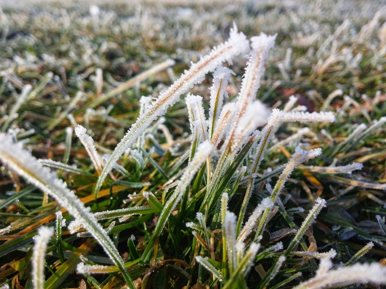 Close-Up Of Frost On Grass