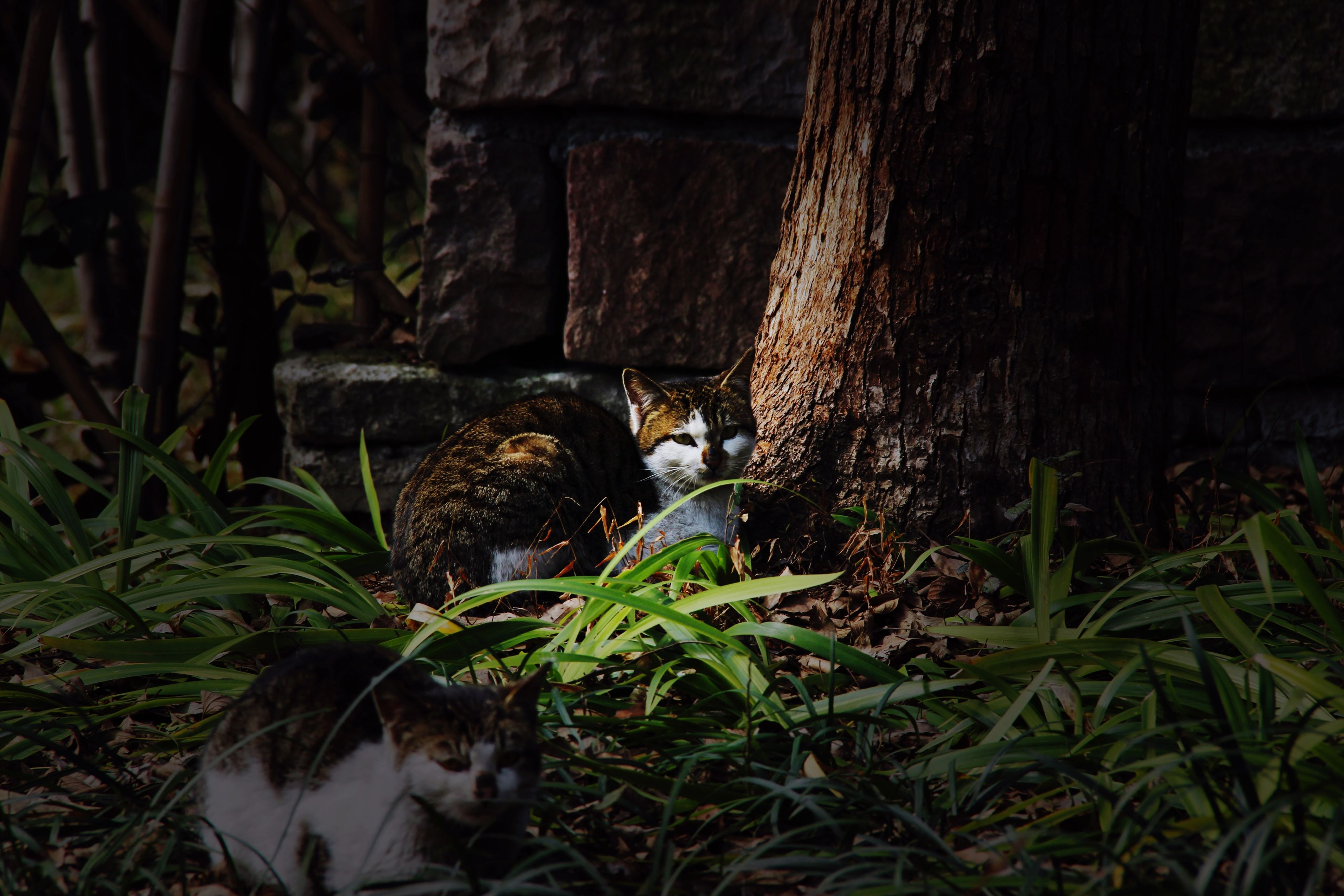 animal themes, one animal, animals in the wild, mammal, wildlife, domestic animals, plant, domestic cat, feline, cat, pets, grass, bird, sitting, nature, outdoors, two animals, relaxation, zoo, no people