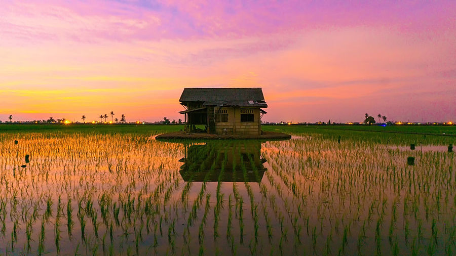 Agriculture Beauty In Nature Cloud Cloud - Sky Cloudy Crop  Cultivated Land Field Grass Grassy Growth Horizon Over Land Idyllic Landscape Nature No People Orange Color Outdoors Plant Rural Scene Scenics Sky Sunset Tranquil Scene Tranquility