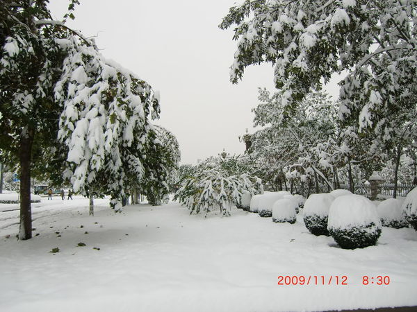 Tree No People Snow Text Cold Temperature Postcard Outdoors Nature Sky Day Taken In China
