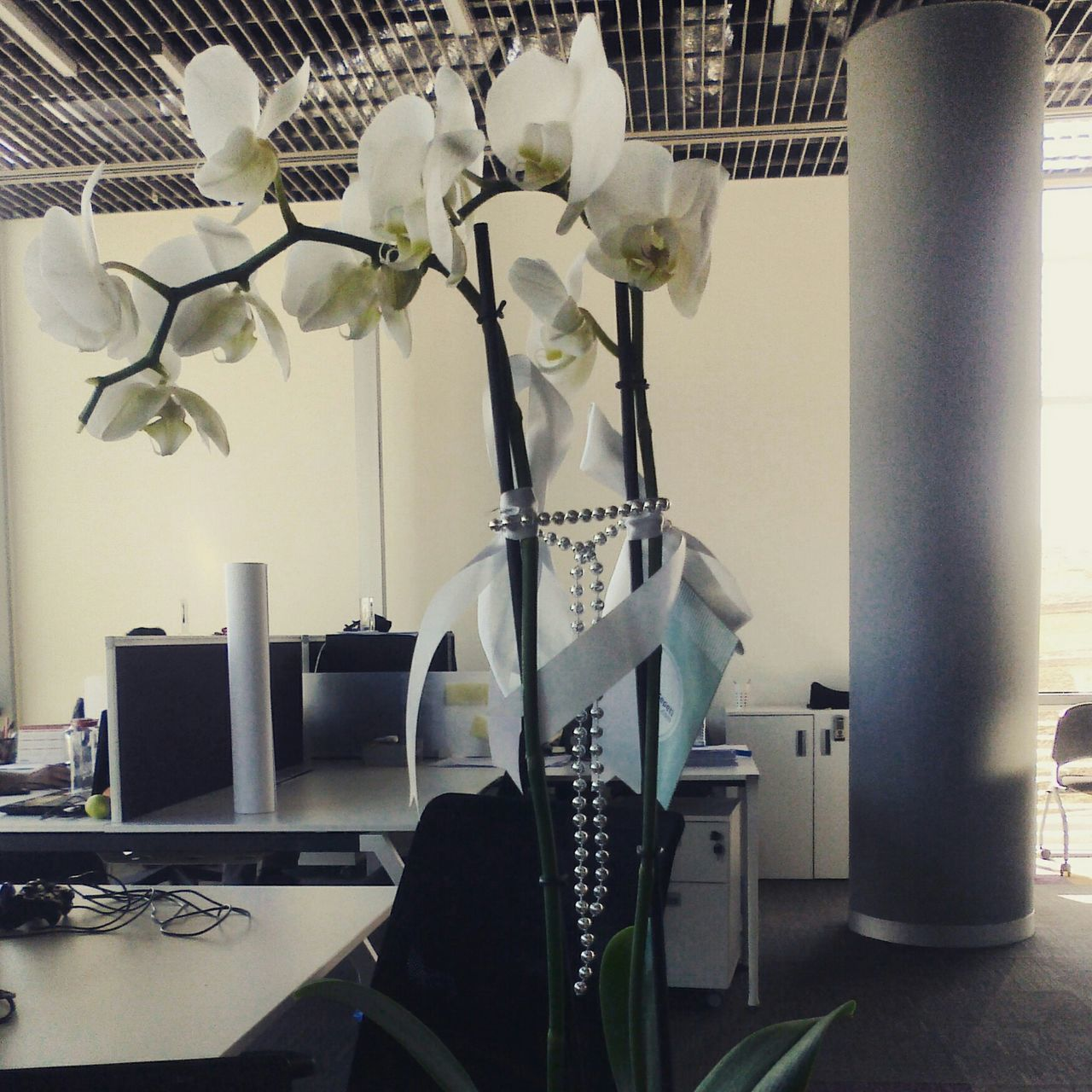 Beautiful stock photos of orchid, Beads, Blooming, Business, Desk