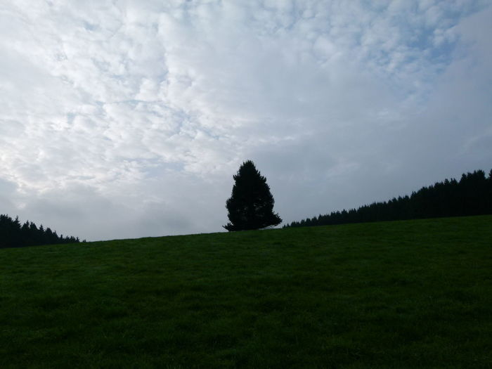 Cloud - Sky No People Landscape Beauty In Nature Outdoors Sky Day Nature Tree Area Politics And Government