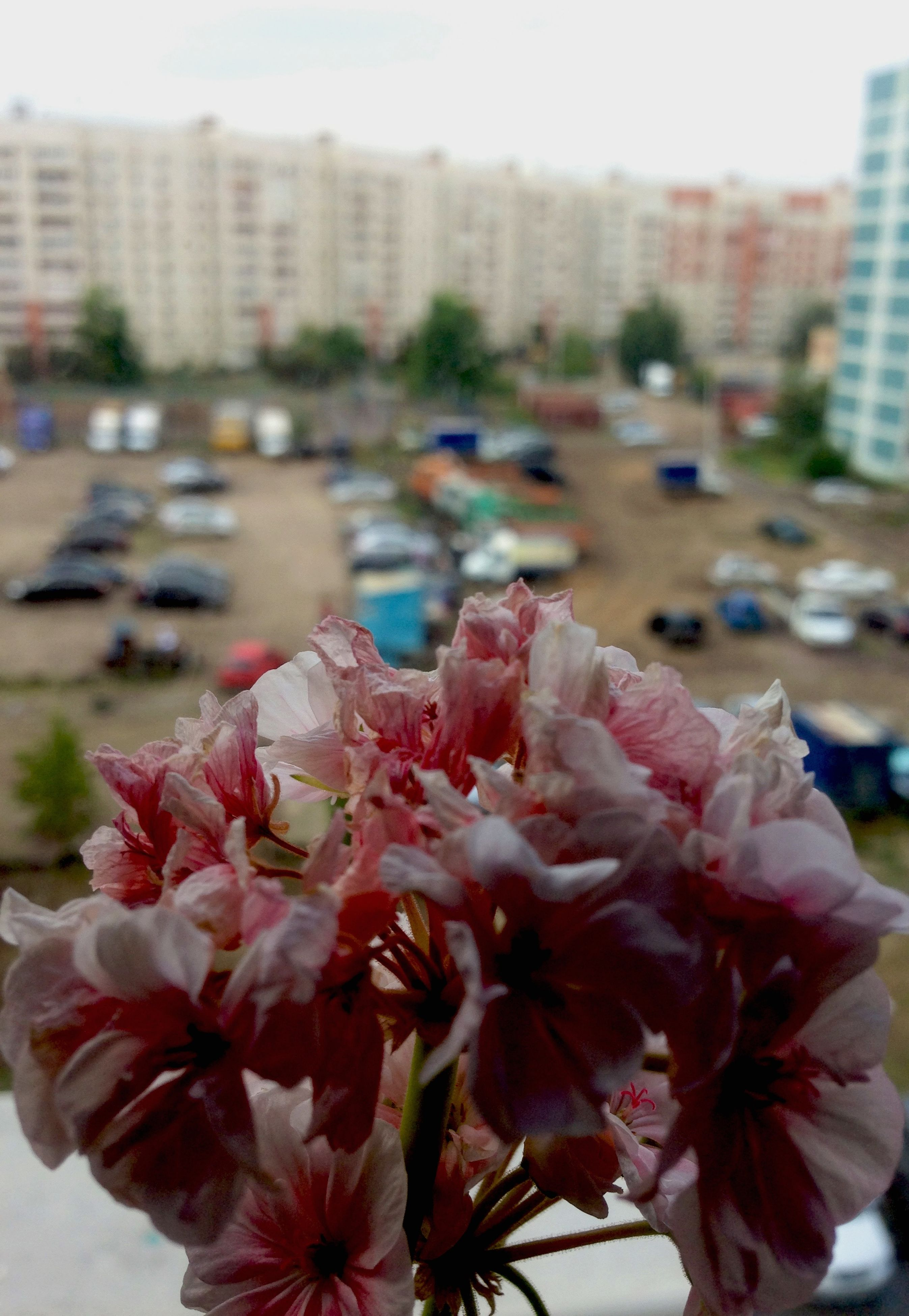 flower, focus on foreground, fragility, petal, freshness, close-up, building exterior, growth, pink color, flower head, nature, beauty in nature, blooming, day, built structure, outdoors, city, plant, architecture, park - man made space