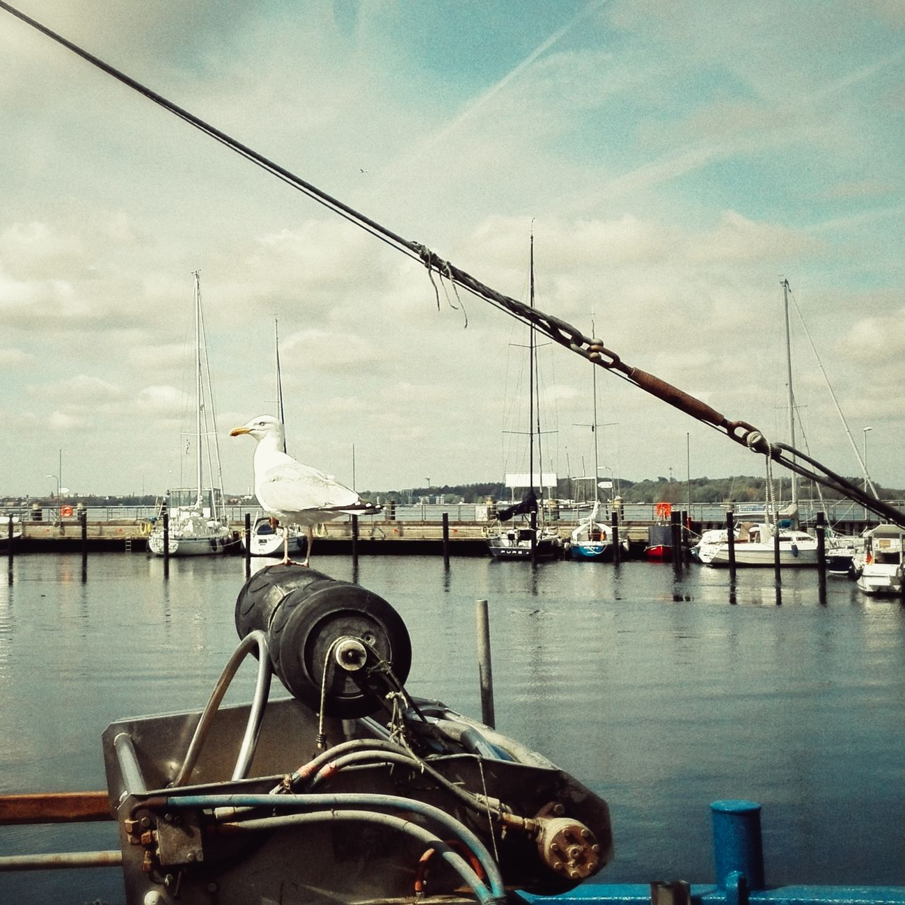 Sea Harbor Nautical Vessel Gull Sea Gull Baltic Sea Retro Style Harbour Life Harbour View Moinmoin