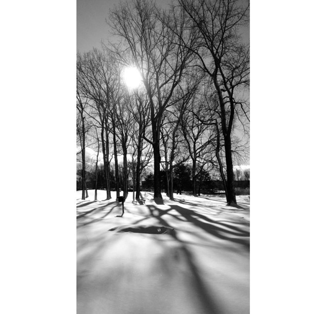 The full version of my Long Shadows pic. In cropped thanks to lopez689 and her app suggestion. Thank you. #bw #bnw #bw_lovers #blackandwhite #bnw_life Mdbw Treeporn_challenge Blackandwhite Only_greyscale Bw Ig_pornclick Bnw All_shots Bws_worldwide Bw_lovers Irox_bw Royalsnappingartists Ic_trees Bnw_worldwide Bnw_life Luremein Unsung_masters Branching_out