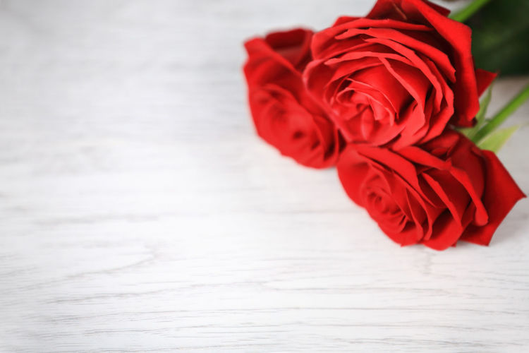 Flower Red Rose - Flower Fragility Petal Freshness Flower Head Close-up Indoors  Beauty In Nature No People Day Nature First Eyeem Photo Carnival Crowds And Details EyeEmNewHere The City Light Minimalist Architecture