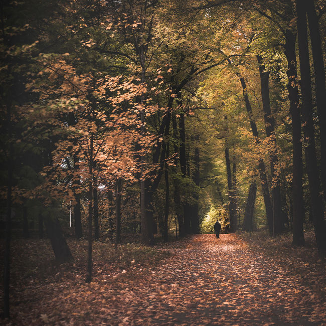 A walk in the park. Autumn in Stockholm, Sweden. Beauty In Nature Day Freshness Growth Illuminated Nature No People Outdoors Scenics Tranquil Scene Tranquility Tree