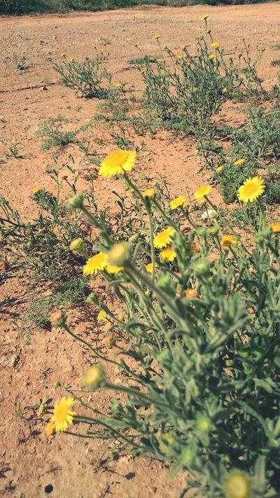 Desertflower Flowerporn