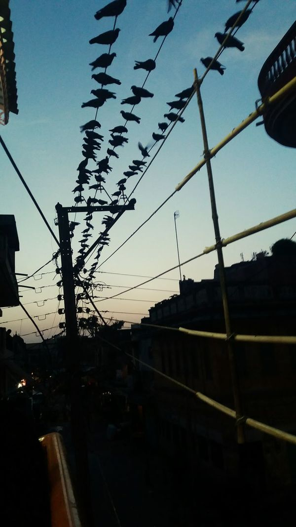 Birds Evening Time City Evening Pillars Wires Hanging Out Check This Out Taking Photos Enjoying Life 2016 India EyeEm Best Shots Beautiful View Sky Check This Out Pegions Pegion On Wires