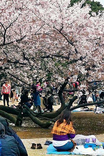 Orange Shawl Spring2015 Sakura Cherry Trees Hanami Shinjuku Gyoen National Garden Tokyo, Japan Travel Photography Streetphotography