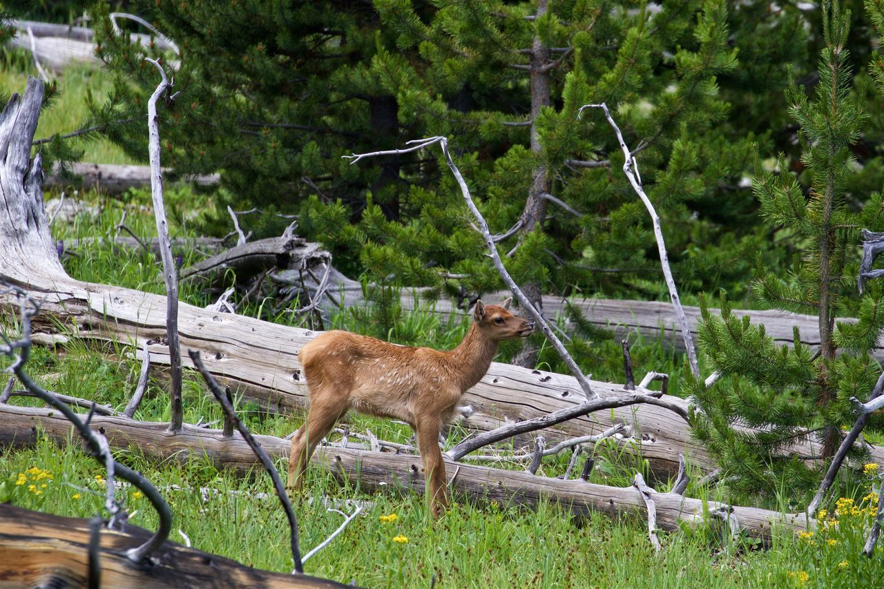 Mom, is that you? Animal Themes Baby Elk Beauty In Nature Ełk Herbivorous Mammal Mammals Nature