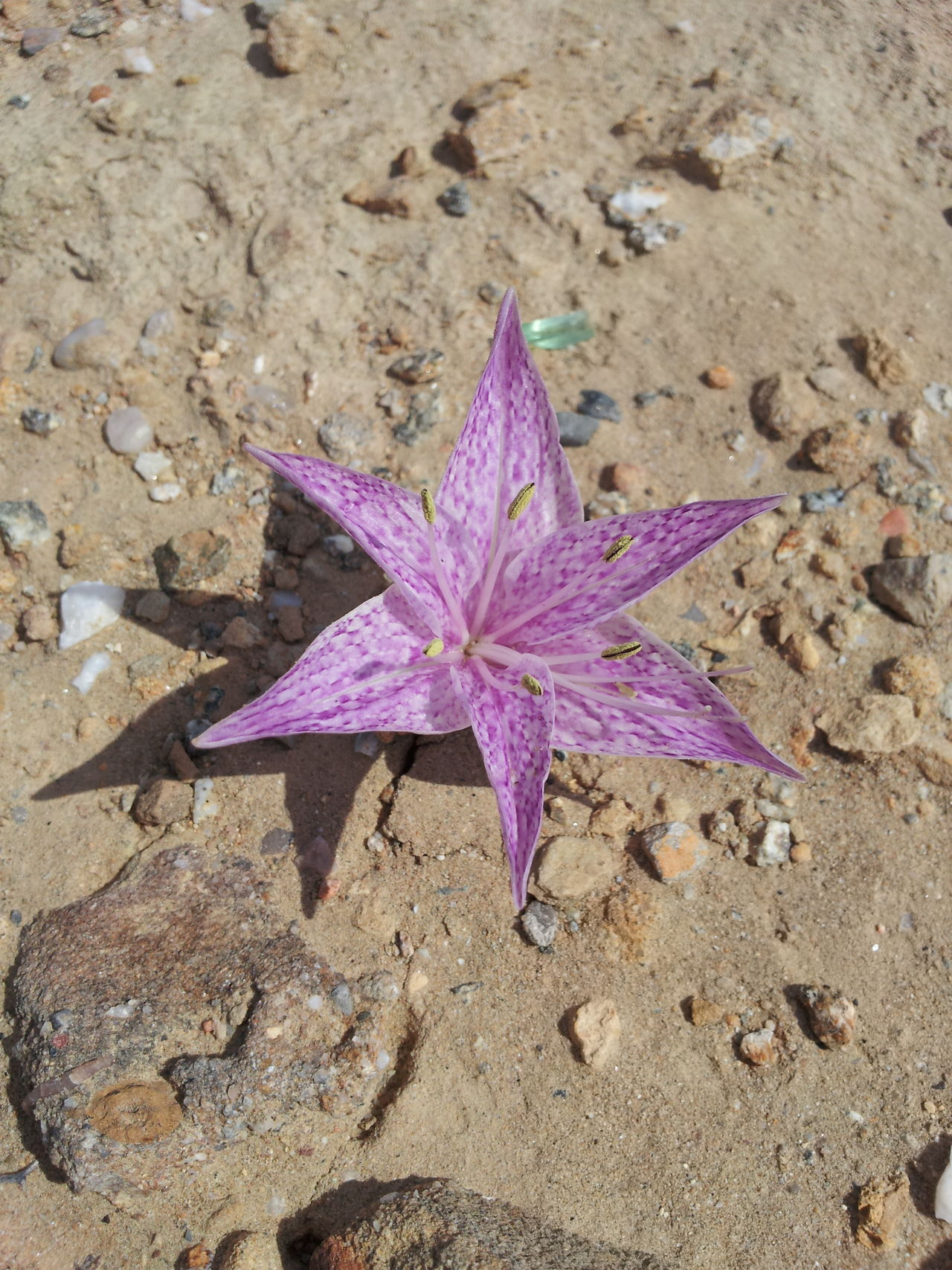 Beauty In Nature Close-up Day Flower Flower Head Flowers Fragility Freshness High Angle View Nature No People Outdoors Purple Sand