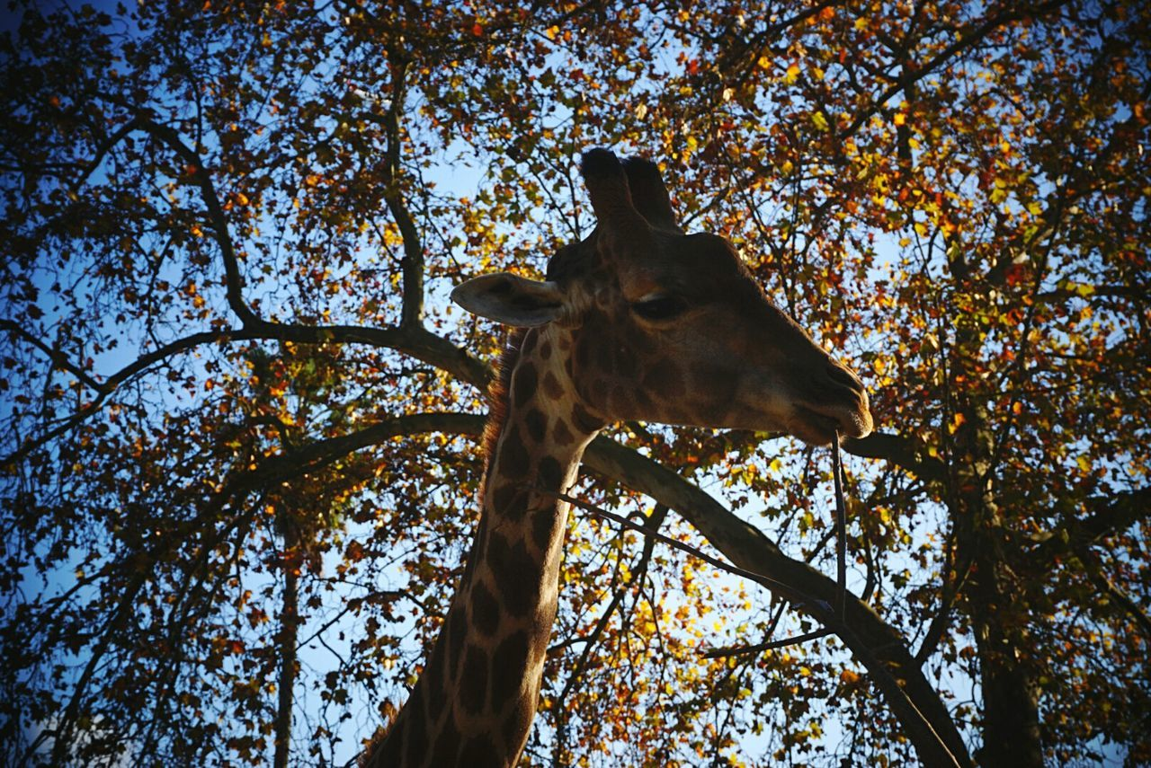 tree, low angle view, branch, nature, one animal, day, no people, animal themes, outdoors, sky, tree trunk, growth, mammal, beauty in nature