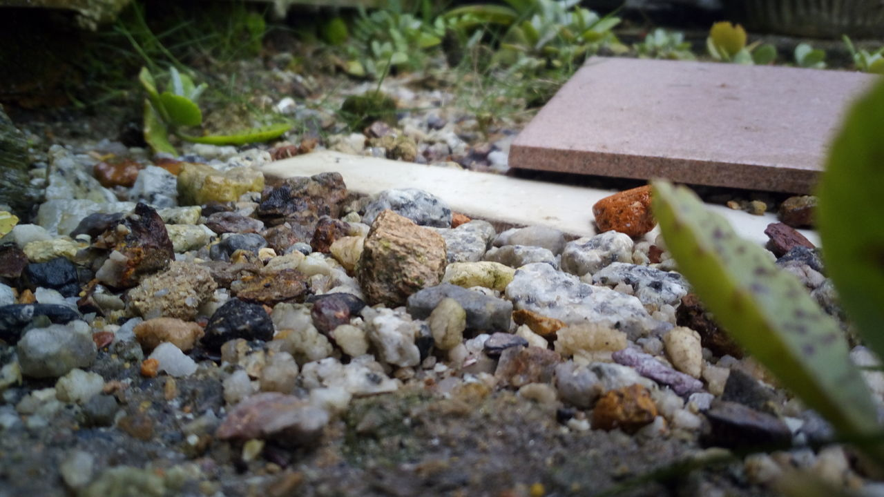 Gravel Pit Series Nature Outdoors No People Day Close-up Gravel Gravel Plant Beauty In Nature