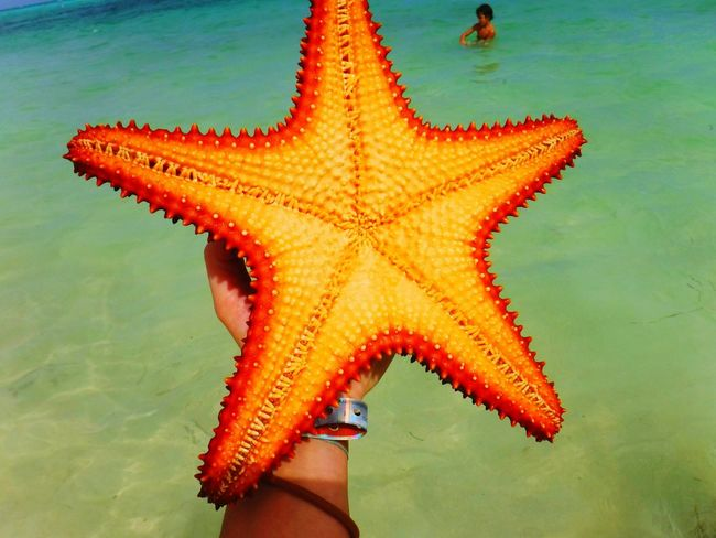 Starfish  Star Shape Sea Life Sea Orange Color Vibrant Color Red Color Vacations Punta Cana Ocean Water Beach Starfish At Beach