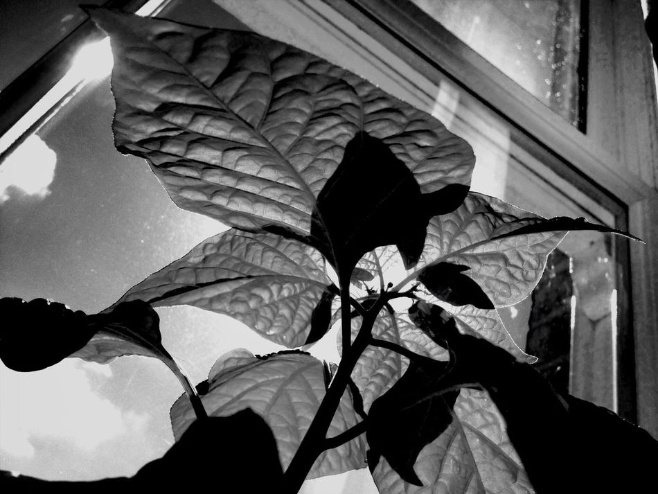 Got to love chilli Black And White Light And Shadow