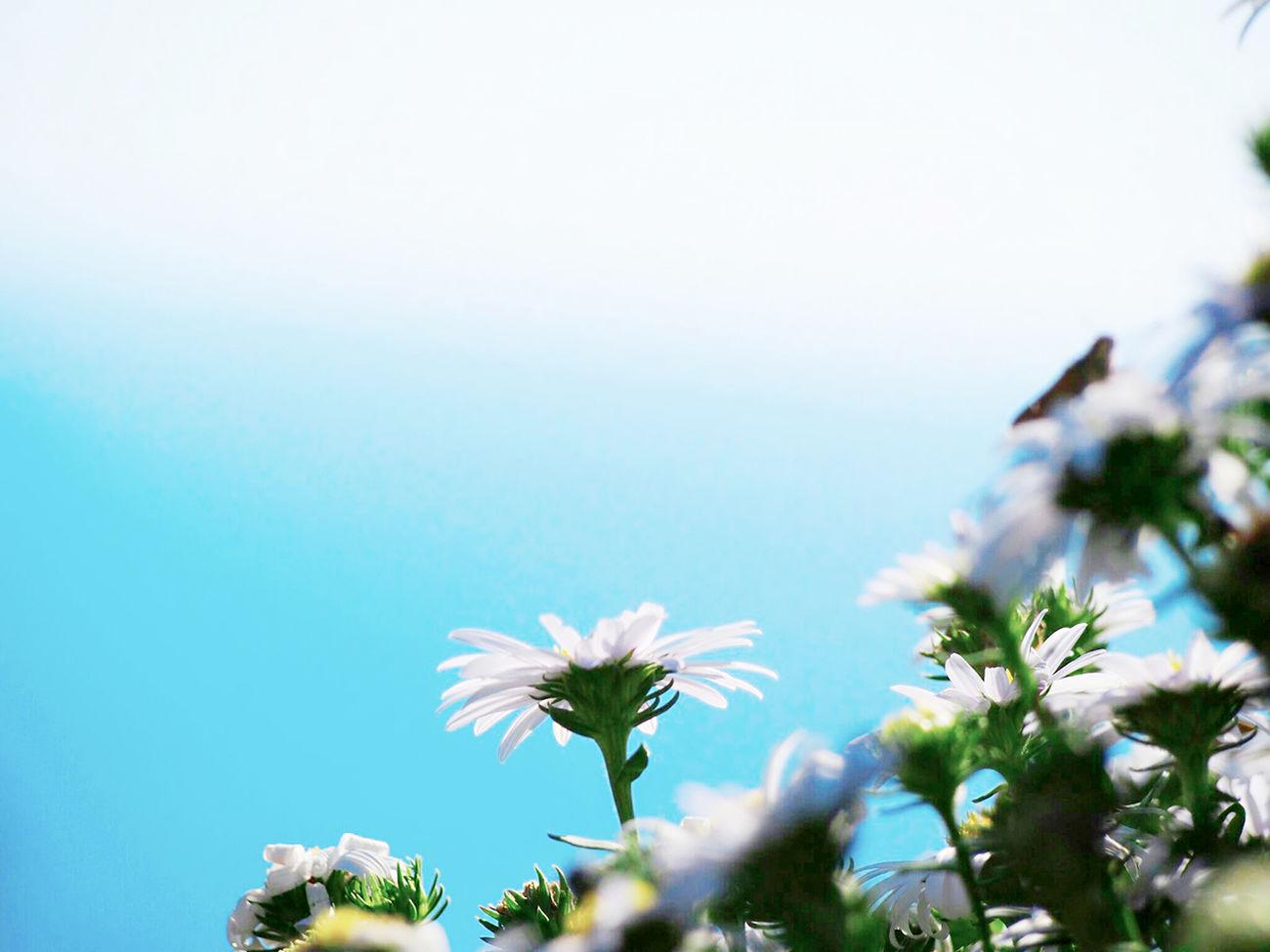 心が雲ったら…晴れた空を見上げよう 空 Sky Sky_collection 野菊 Flower Flower Collection Nature Beauty In Nature EyeEm Nature Lover Taking Photo My Point Of View EyeEm Best Shots - Nature