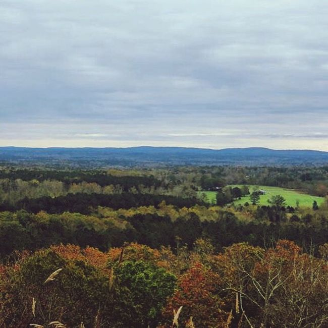 Pine Mountain! EyeEm Nature Lover Autumn Leaves God's Beauty Beautiful Nature Nature_collection