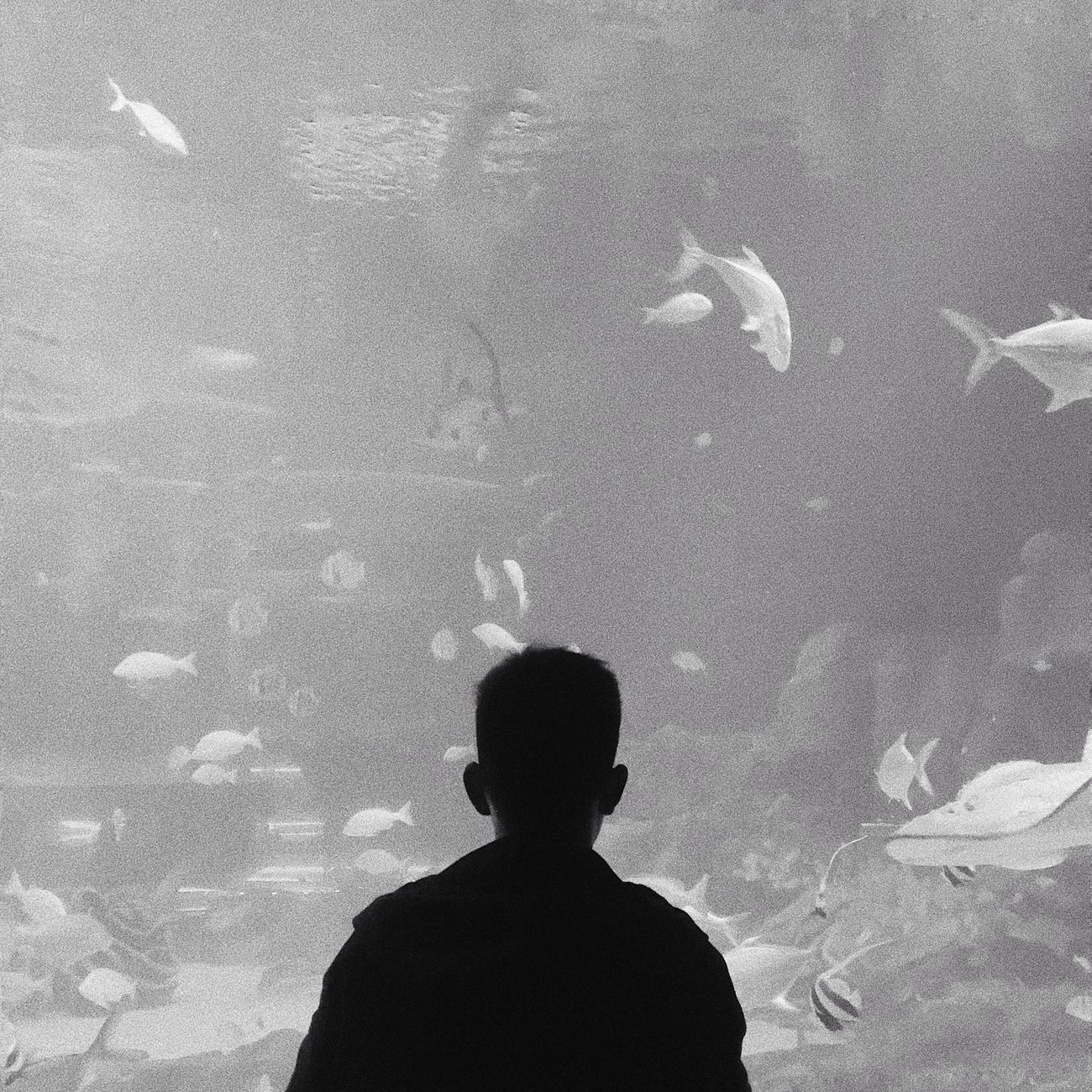 Fish Aquarium Animal Themes Real People Silhouette Lifestyles Swimming Large Group Of Animals One Person Leisure Activity Watching Nature Animals In The Wild Sea Life Indoors  Stingray Water People Day