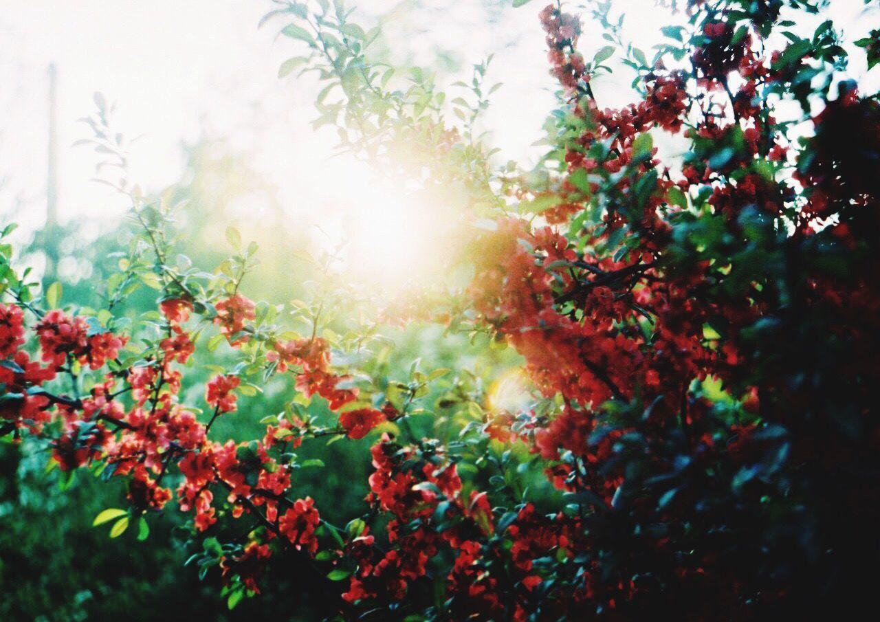 Morning Light Mirning 35mm Film 35mm Analogue Photography Analog Camera Zenit Flowers Morningvibes EyeEm Gallery