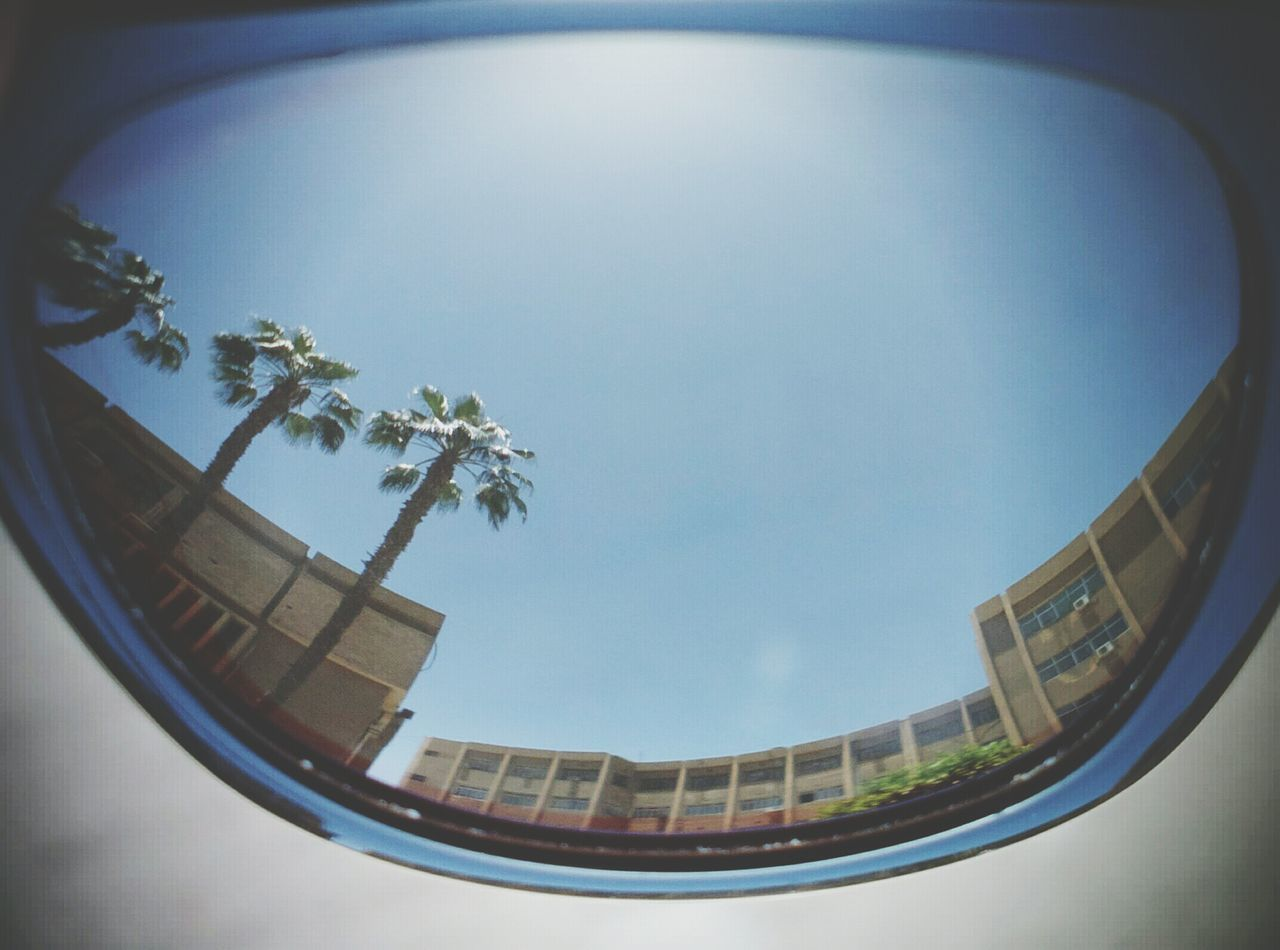 Palm Tree Built Structure Architecture Tree Fish-eye Lens Day Water Travel Destinations Cityscape Building Exterior Outdoors Sky City Colledge Reflection Sunglasses ✌👌 No People Imagination