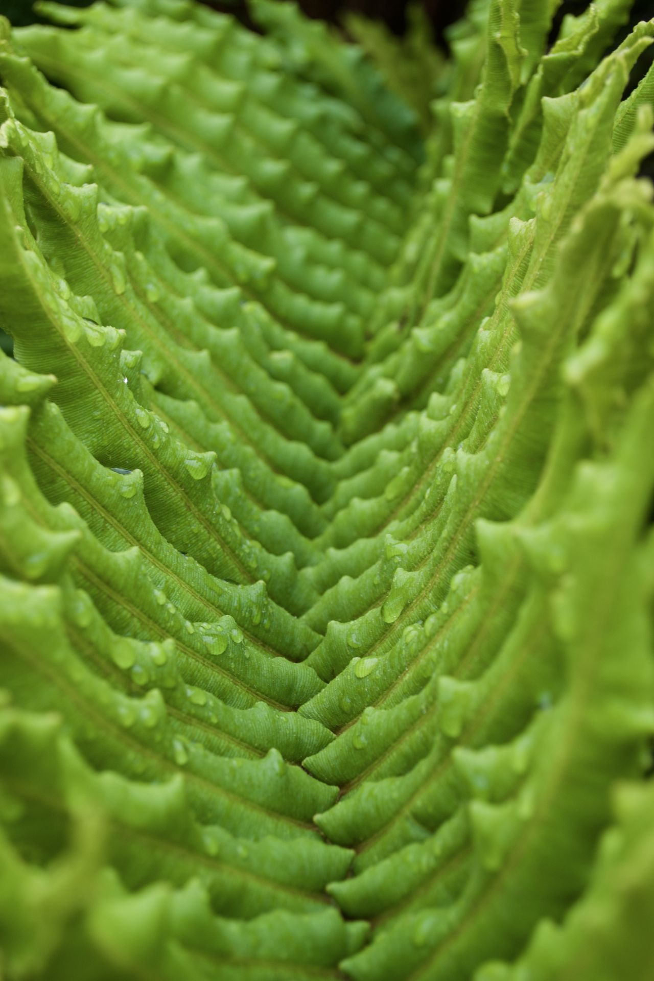 Spiked Valley Close-up Fern Ferns Foliage Foliage, Vegetation, Plants, Green, Leaves, Leafage, Undergrowth, Underbrush, Plant Life, Flora Green Green Color Green Green Green!  Macro Morning Nature Nature Photography Nature_collection Spikes
