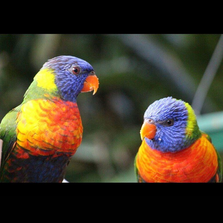 Southafricadiaries Wildliferanch Birdphotography