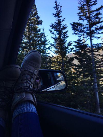 Car Forest Mountains Colorado Trailridgeroad