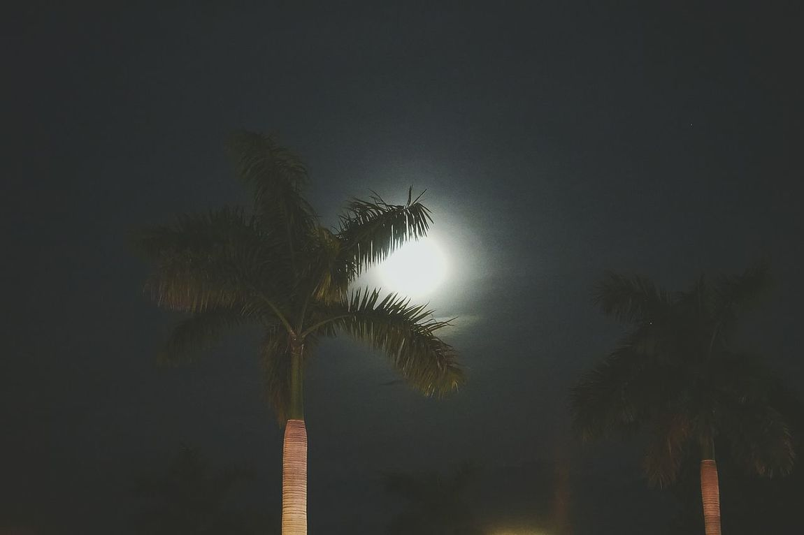 Cambodia Photos Palm Trees Moonlight Moon Travel Night View Moon Light Mood Captures Night Lights Silhouette Nightphotography Streetphotography Relaxing Moments Light And Shadow Taking Photos Tree And Sky Treepark Streamzoofamily
