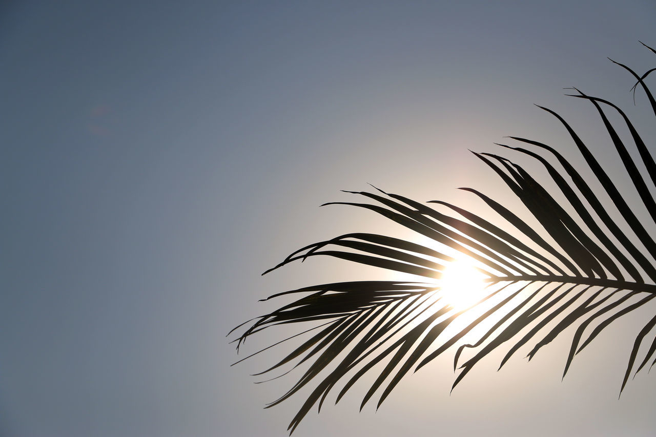 Beautiful stock photos of sonne, Beauty In Nature, Branch, China, Day