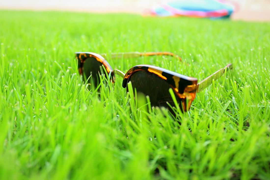Grass Green Color Glasses Gafas De Sol  Outdoors Cesped Objects Objeto One Animal No People Nature Growth Day Animal Themes Domestic Animals Mammal Close-up First Eyeem Photo