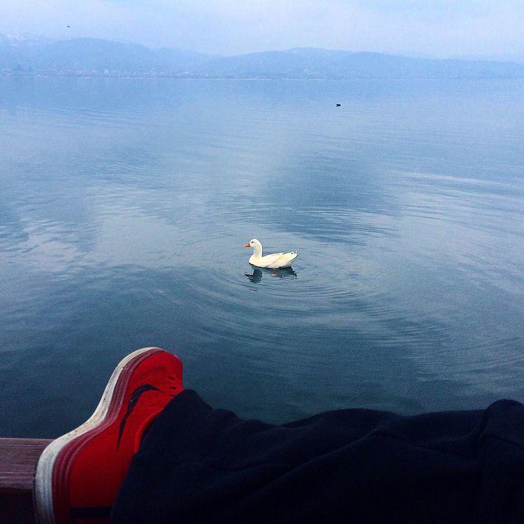 Turkey Turkeyphotooftheday Sakarya Adapazarı Düzce Sakarya Gölü Red Redshoes Great Atmosphere Nature