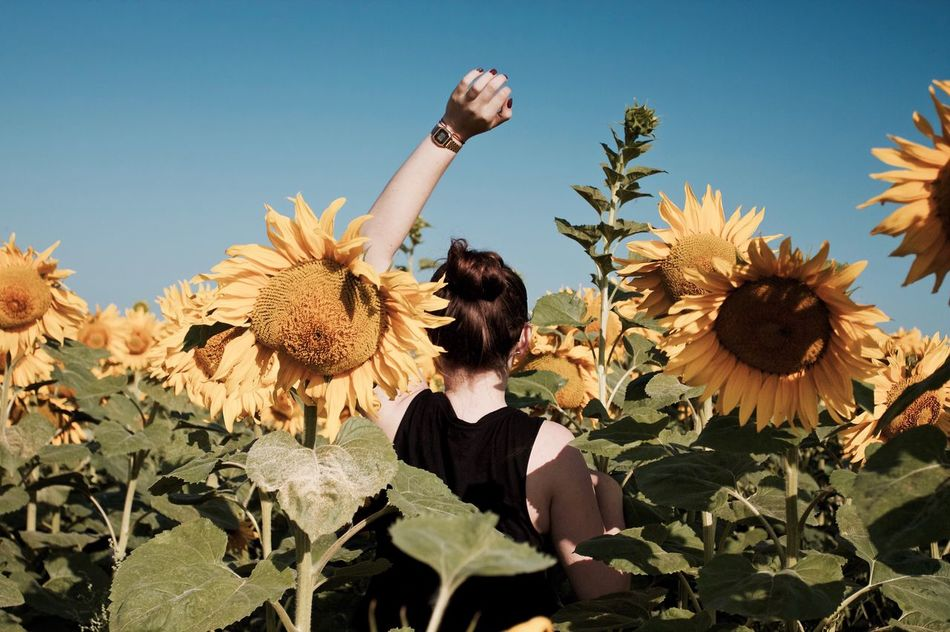 Beautiful stock photos of sunflower,  Beauty In Nature,  Carefree,  Clear Sky,  Day