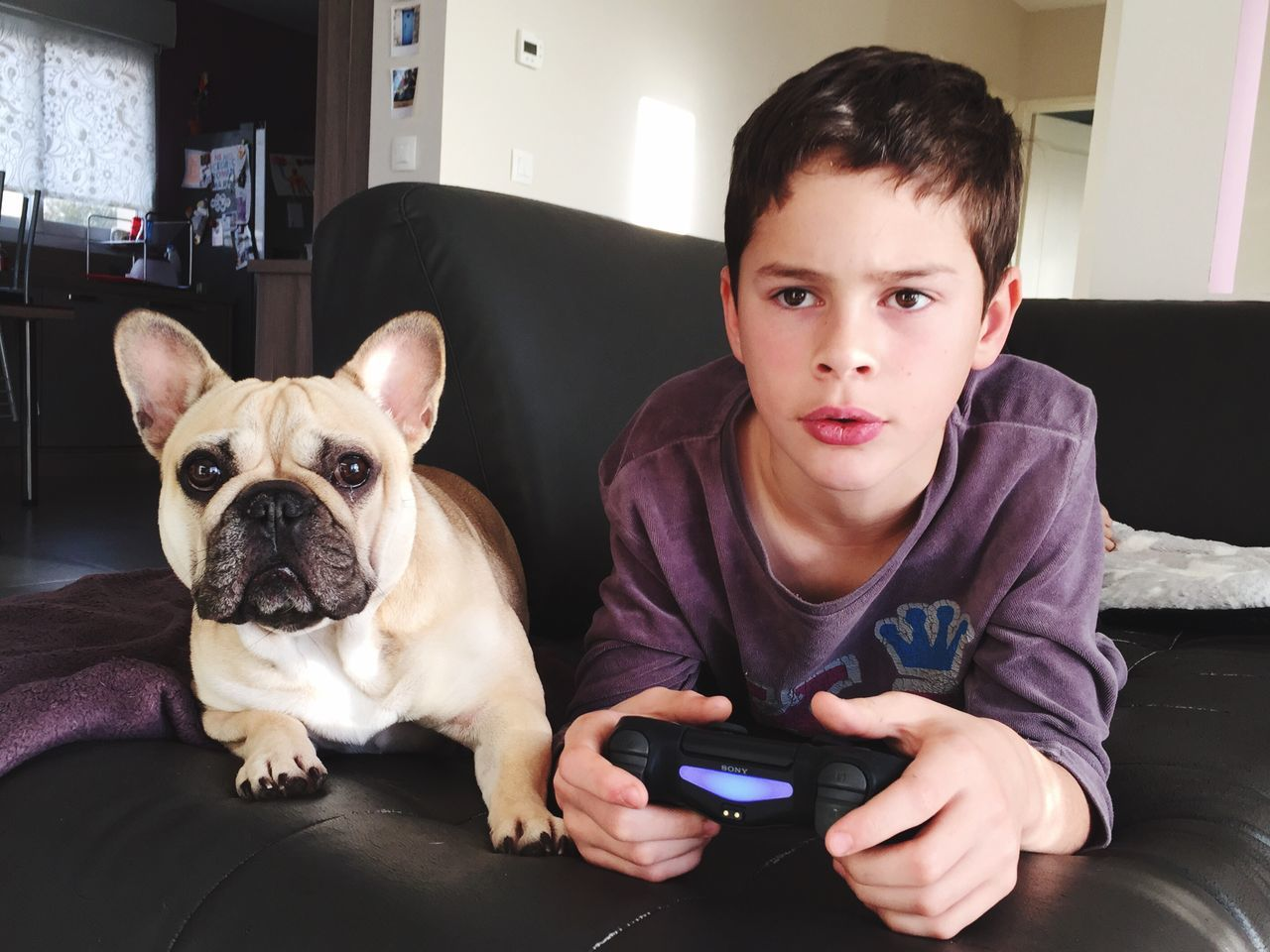 Pets Dog One Animal Lifestyles Domestic Animals Animal Themes Boys Looking At Camera Home Interior Indoors  Front View Portrait Childhood Real People One Person Wireless Technology Leisure Activity Technology Sitting Domestic Life Frenchbulldog Duet Friendship