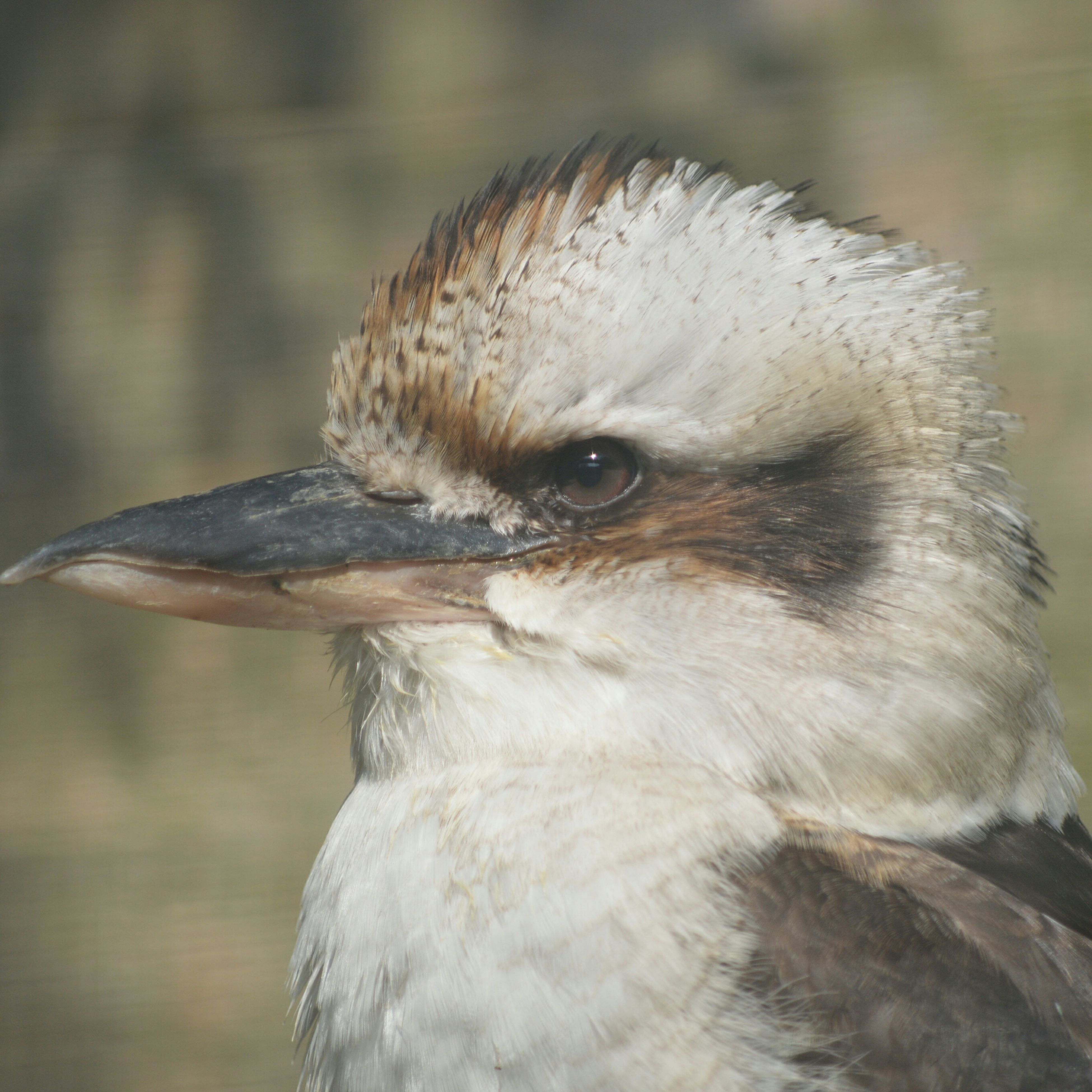 animal themes, one animal, bird, animals in the wild, wildlife, beak, close-up, focus on foreground, animal head, bird of prey, animal body part, looking away, nature, outdoors, feather, owl, animal hair, day, side view, no people