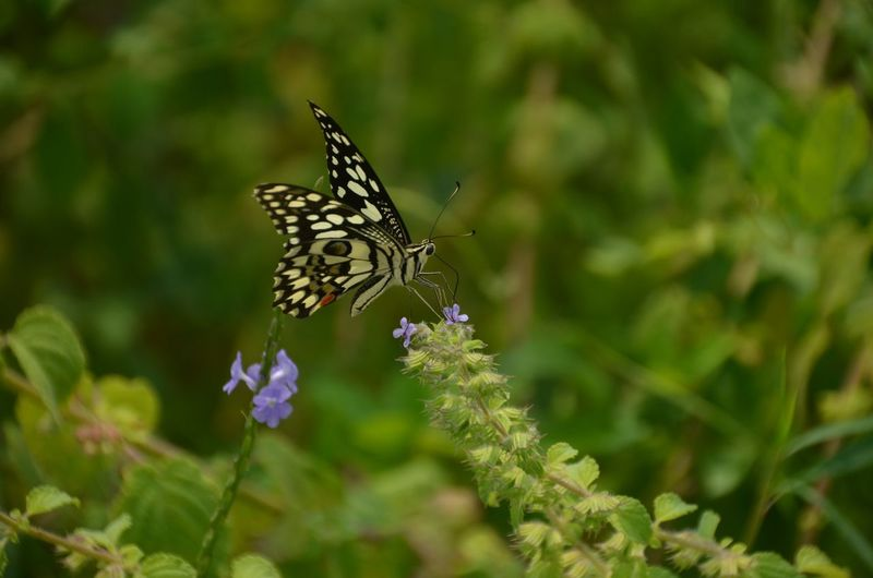 Noedit Capturing Life Greenlovers Wanderlust Traveldiaries✈🌍 NikonD5100 Nikonphotography Butterfly Butterfly Collection Nikon From My Point Of View My Commute The Essence Of Summer The Following Travel Wandering Around Freedom Love To Take Photos ❤ Nature Photography Nature_collection