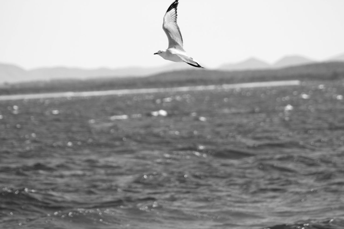 EyeEm Best Shots Eyeem Australia Winter Beach Monocrome Nelsons Bay Blackandwhite Seaside Ocean Skyporn EyeEm Gallery