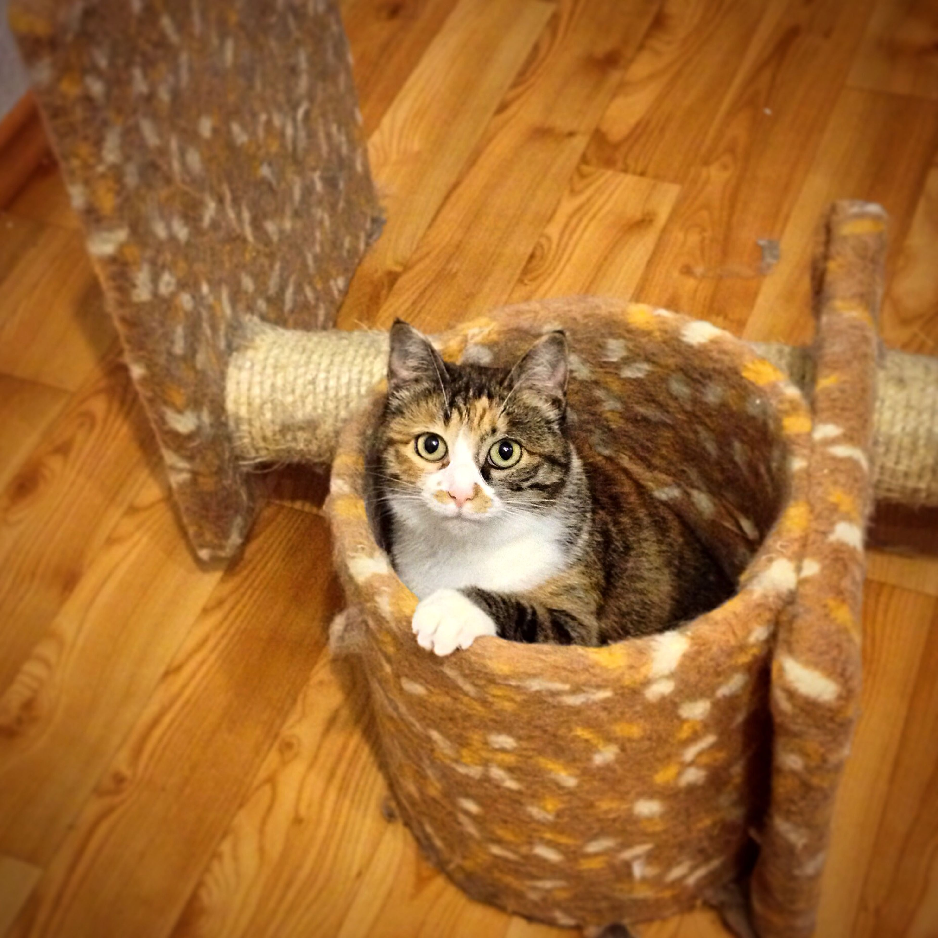 indoors, animal themes, pets, domestic animals, one animal, looking at camera, portrait, domestic cat, mammal, cat, home interior, basket, high angle view, table, close-up, relaxation, whisker, no people, feline, food and drink