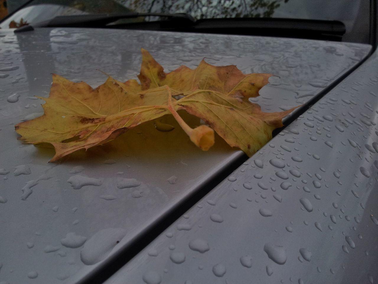 Blatt fällt auf Auto Autumn Colors Herbst In Seinen Schönsten Farben Natural Beauty Naturelovers Wood - Material Herbstfarben Herbstlaub Herbst, Laub, Herbstlaub, Herbstfarben, Herbstleuchten, Herbstspaziergang,