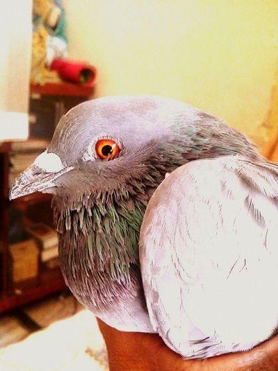 Randomshot Pigeon Bird  mrng Click !! Birds🐦⛅