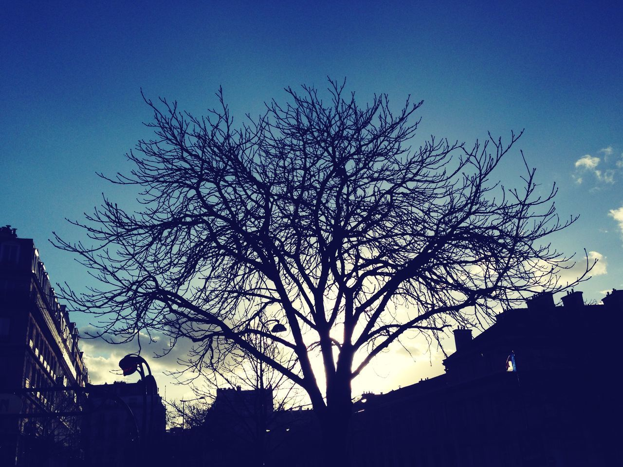 Nation Place Paris Sky Treescollection Wintertree Wintersky Frenchflag Sunsetcity