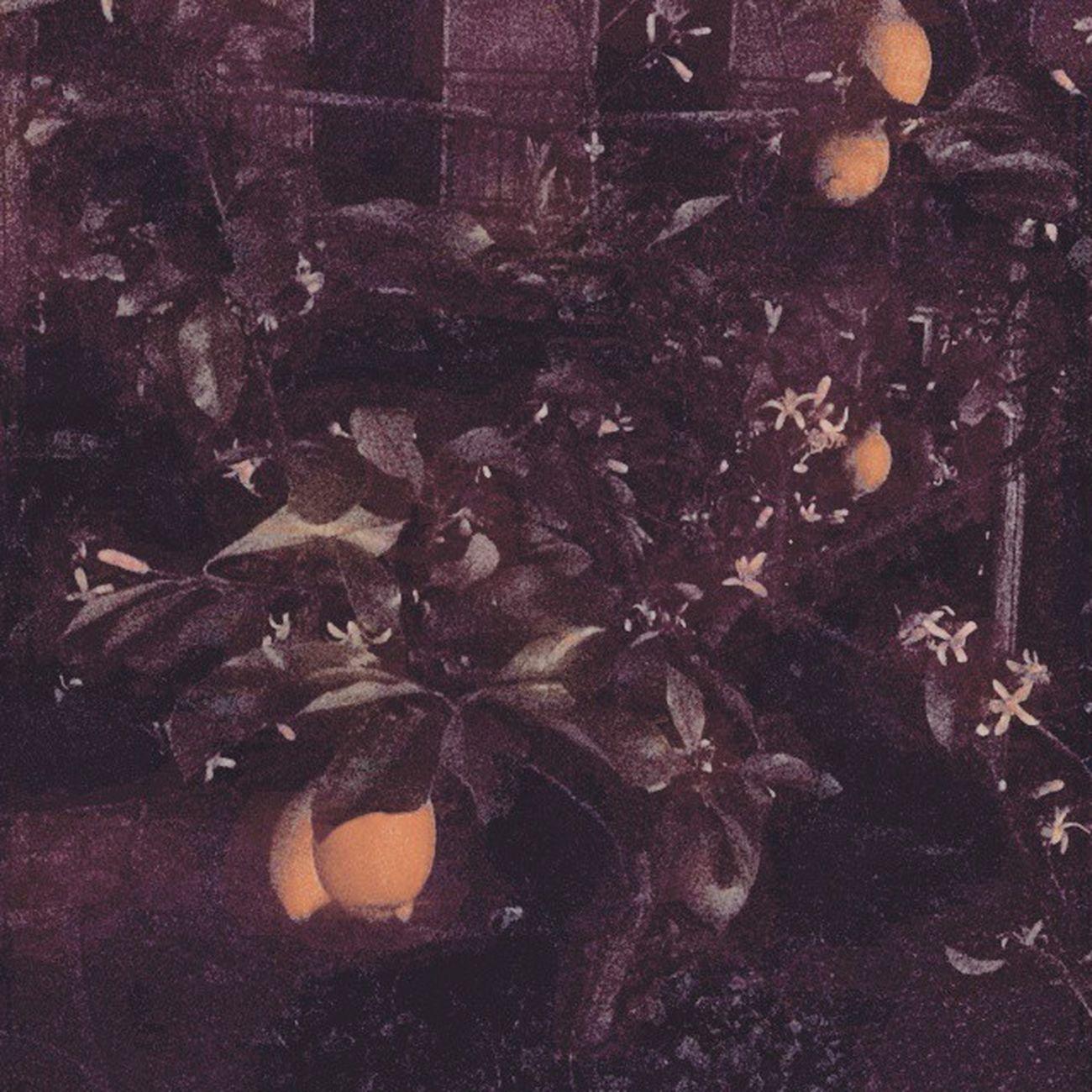 Profumo di stelle di fiore di limone di unione