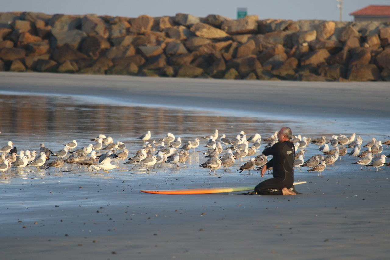 Beach Day Flock Of Seagulls Kneeling One Person Outdoors Preparing Seagull And Surfer Shore Surfer Water