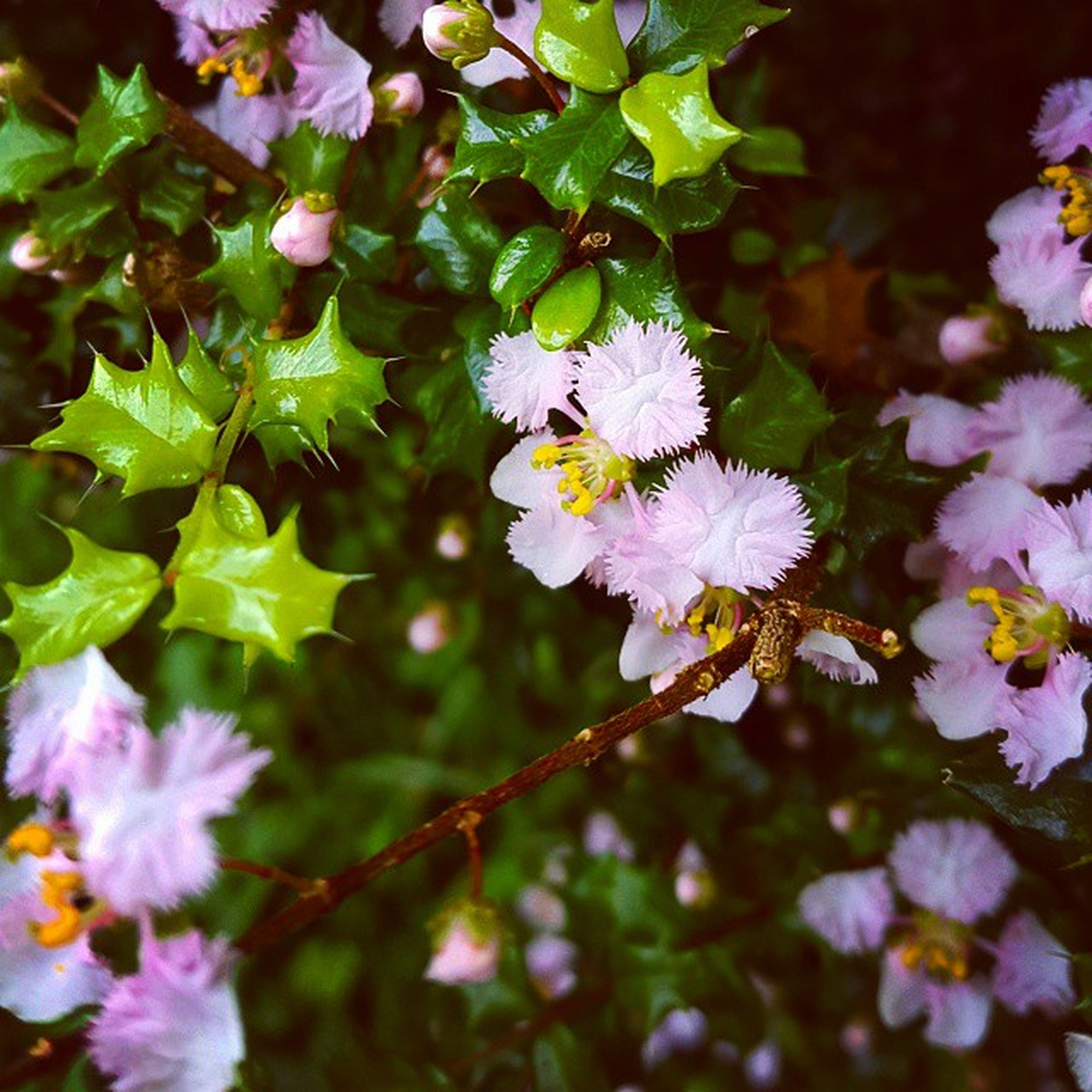 flower, freshness, fragility, growth, beauty in nature, petal, nature, focus on foreground, purple, blooming, close-up, flower head, branch, blossom, in bloom, plant, stem, outdoors, tree, springtime