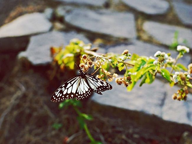 Butterfly 一眼 Insects  Life