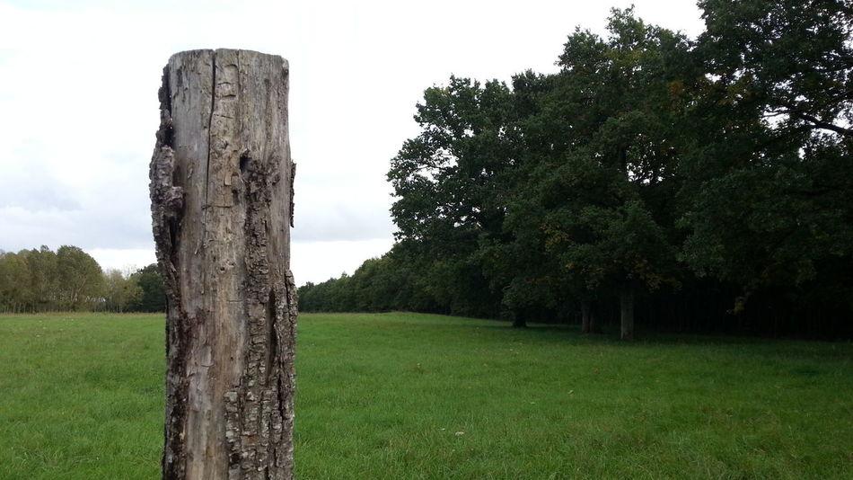 Anjou Tree Streamzooers
