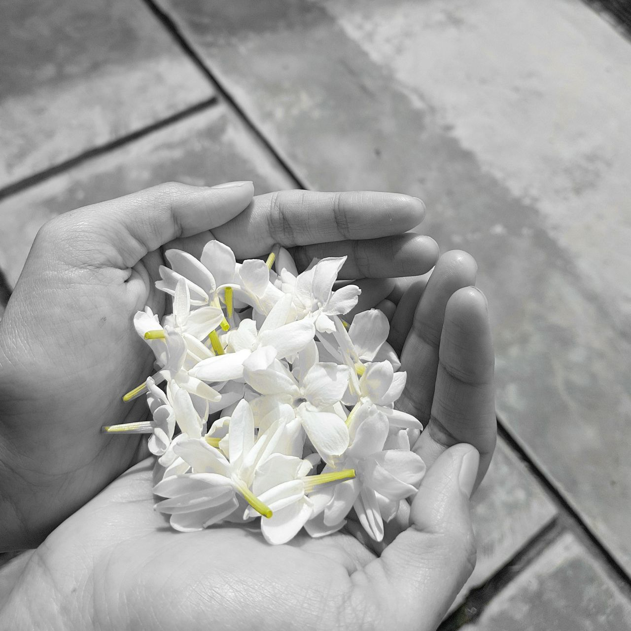 Jasmine in wife hand 😍 Nature Flower S7 Edge Photography Samsung Galaxy S7 Edge Freshness Nature Flower_Collection Flower Photography Flowers,Plants & Garden Black & White Photography Black & White Black&white Black And White With A Splash Of Colour Jasmine Flower Jasmine Flowers Jasmine